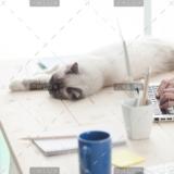 demo-attachment-12-sleepy-cat-on-a-desktop-P4C6THM